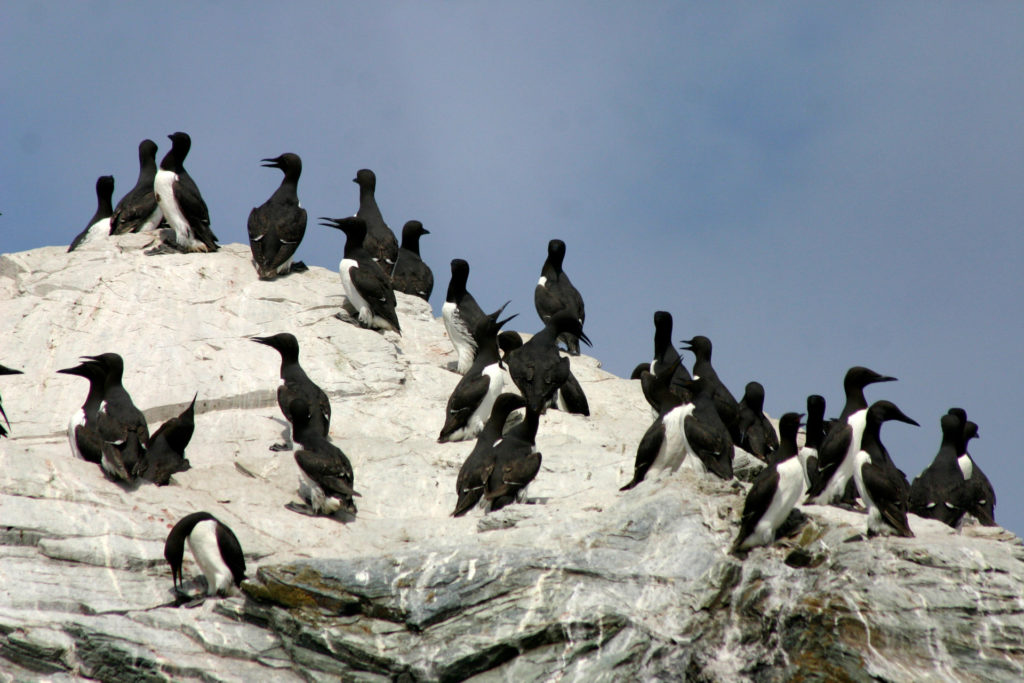 Blue Planet Live Secrets that lurk in the deep African penguin colony