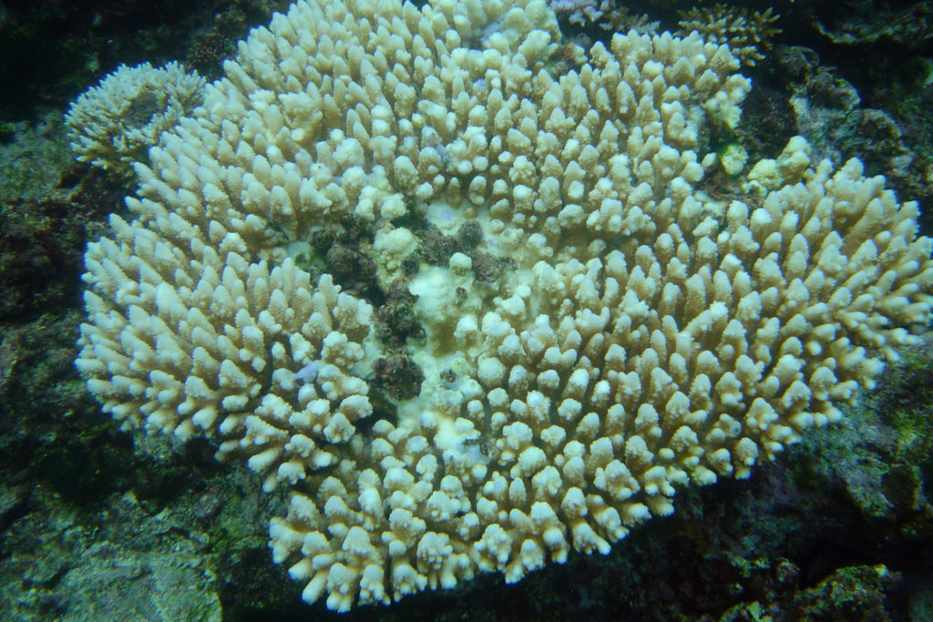 Blue Planet Live Secrets that lurk in the deep coral bleaching (1
