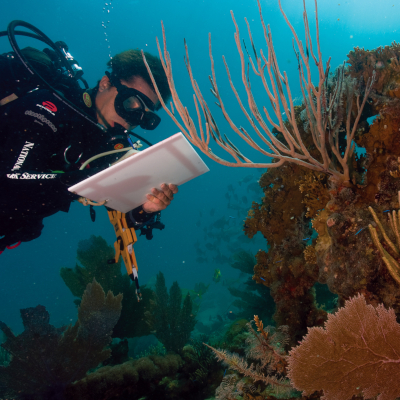Scientists are studying the effects of climate change on coral